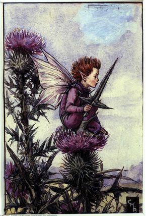 The Thistle Fairy, painted by Cicely Mary Barker for the first edition of her book 'Flower Fairies of the Summer' (1925).  For production reasons, this illustration no longer appears in the book today.  										   																										Author / Illustrator  								Cicely Mary Barker