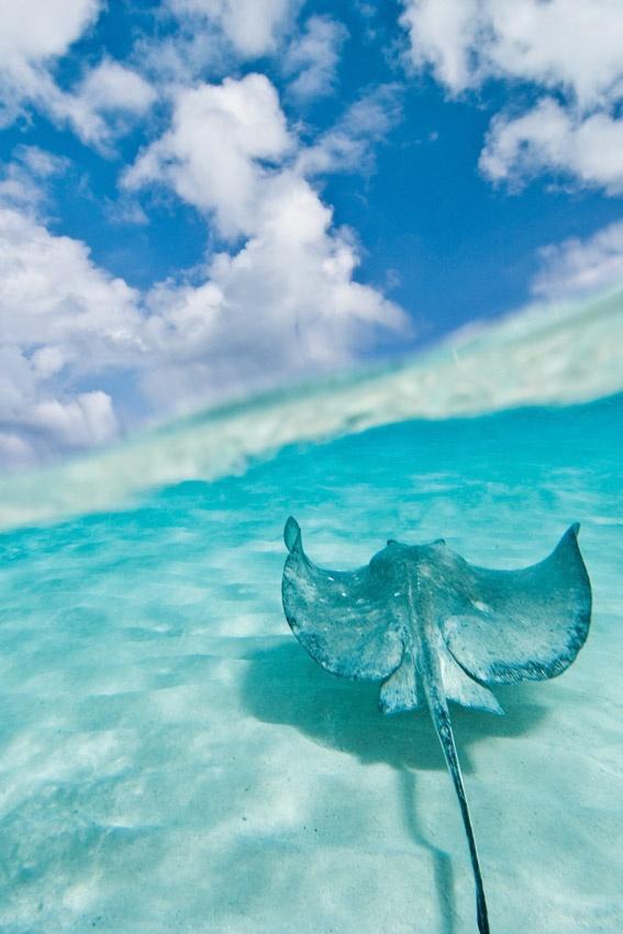 El mar: Repcet, para evitar colisiones entre barcos y cetáceos
