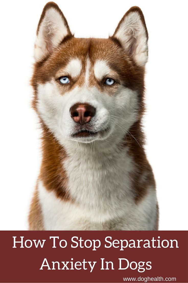 seperation anxiety in dogs Did you know that separation anxiety is the 2nd most common reason why dogs are euthanized or given up by their owners separation anxiety can occur in any breed and at any age.
