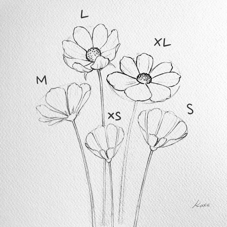 Aesthetic Flower Drawings