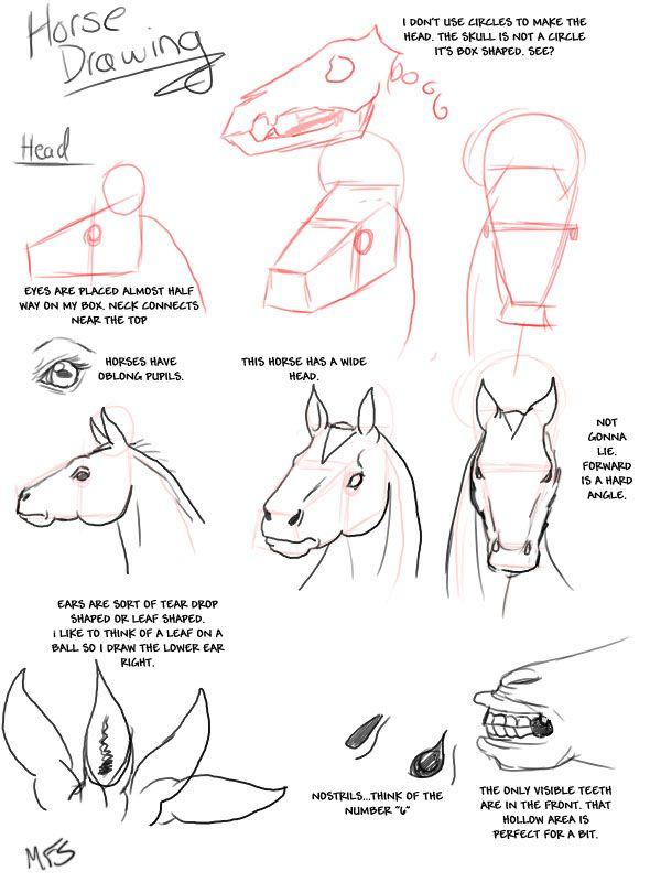 caballos!