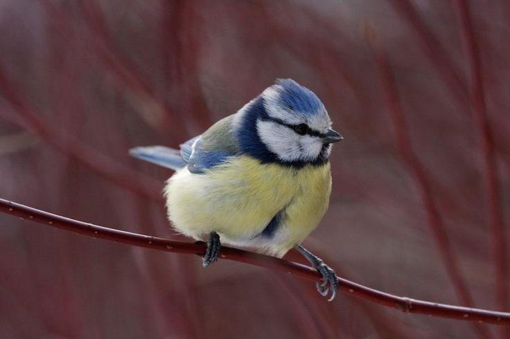 Anna luonnon viihdyttää, rakastu Suomen lintuihin!Tarkka haukka ja muita lintuja jatkaa upeaa, kotimaista luontokirjasarjaa. 1000 ilmiötä Suomen luonnosta -sarja havahduttaa Suomen luonnon pienten ja suurten ilmiöiden äärelle.Kirja on täynnä vertaansa vailla olevia kuvia ja ilmeikkäitä juttuja Suomen luonnon linnuista: Miltä näyttää varpuspöllön pesän sisustus? Voiko mikä tahansa lintu johtaa muuttolentuetta? Kuinka nopeasti joutsen juoksee? Lue nämä ja lähes 200 muuta hersyvää tositarinaa…