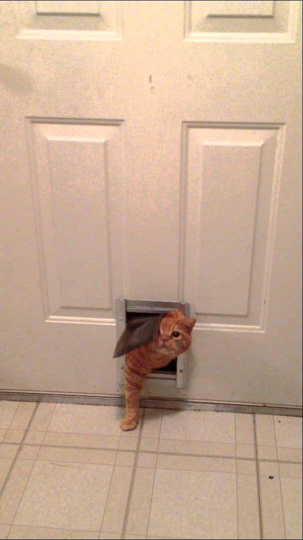 Necessary words... chubby cat pet door very