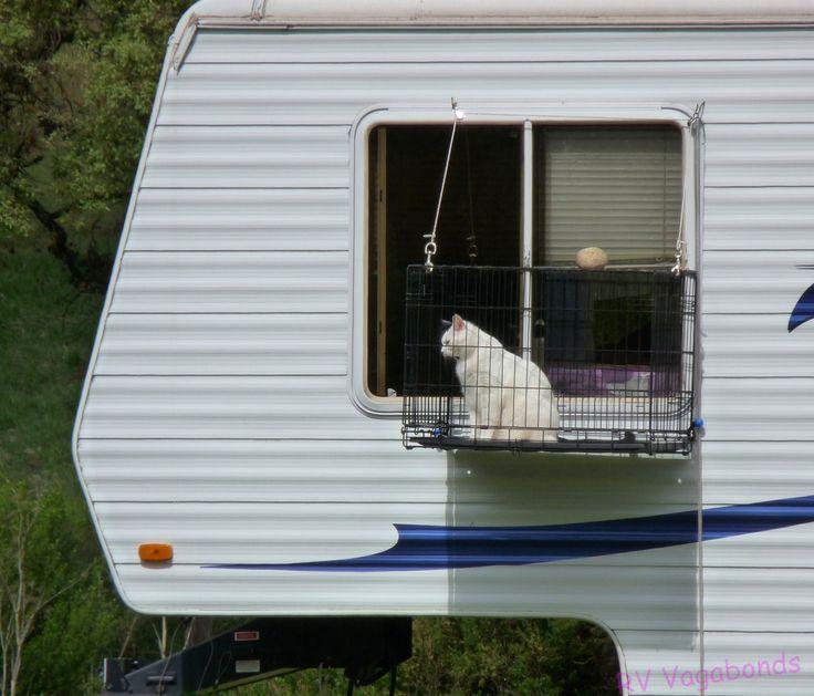 Even RV cats deserve a window view