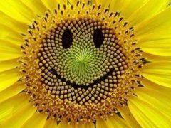笑顔をキープ  世界中に笑顔の花を咲かせます ハッピースマイリストの落合浅子です  人と会ったとき笑顔で挨拶を意識している人は多いです  あなたはその笑顔をどれくらいキープしていますか  すぐに真顔に戻っていませんか  すっと真顔に戻ったときの表情が冷たくてしかも真顔が怖い人が多いんです  あなたの顔は見られていますよ  今日は笑顔をキープしましょう  さあ今週もハッピースマイルでスタートしましょうね  ありがとうございます  今日は笑顔のカウンセリングからスタートします  ハッピースマイリスト 落合浅子笑咲  LINEの登録はこちらから 毎日秒であなたに笑顔をお届けします IDbsk3442e  笑顔に関するカウンセリングスカイプでのマンツーマンの笑顔レッスン 詳しい内容はこちらから http://ift.tt/29diJlk  笑顔セラピーハッピースマイルのセミナーの詳しい内容はこちらから http://ift.tt/27PmnuO   tags[福岡県]