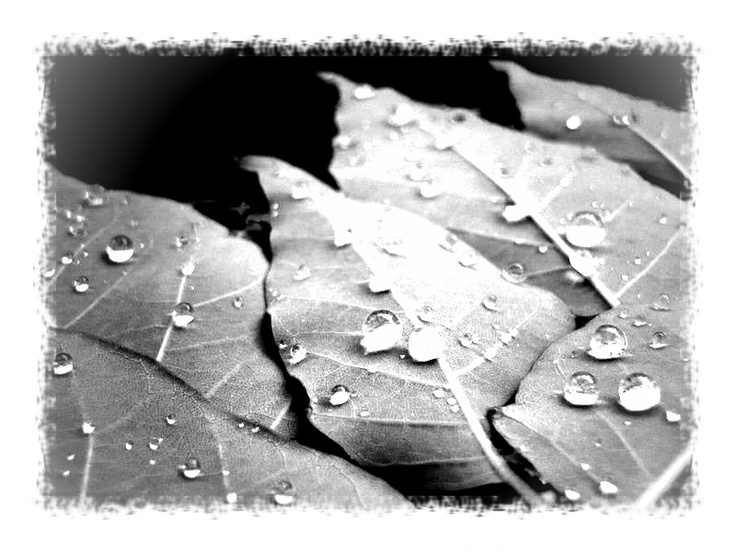 An article and poem on  raining showers of blessing on others.