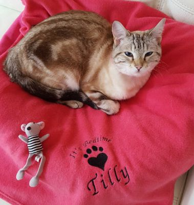 Perfect gift to keep your pet warm over Christmas from fortheloveofcats.co.uk! Check out some more great pet gifts here: http://bit.ly/1U6Qhmn