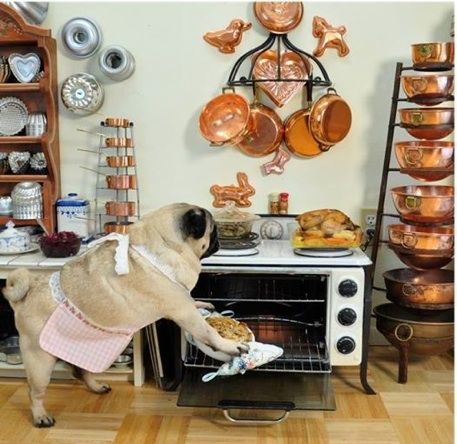 Pug and Pie