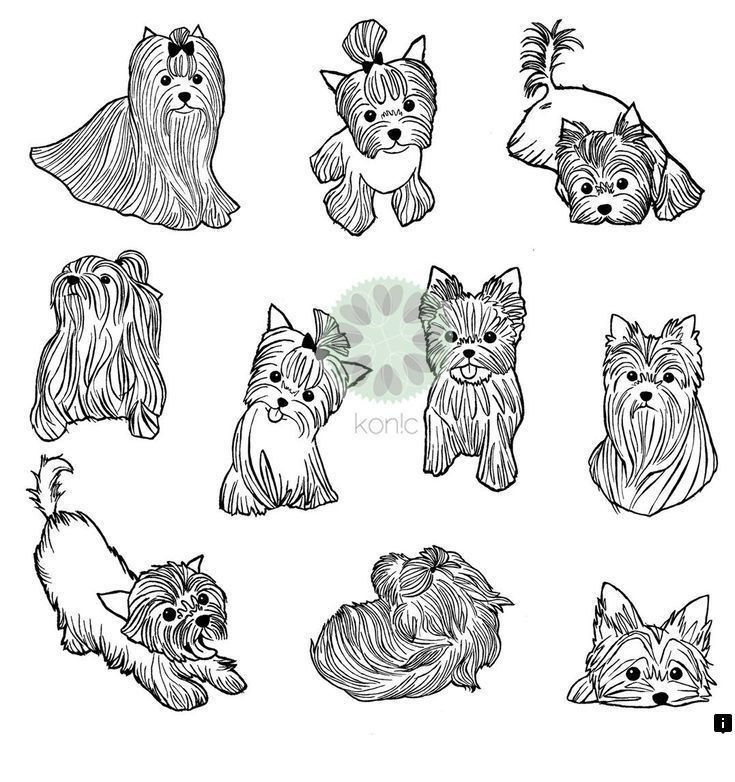Rottweiler Puppies For Sale In Ohio Craigslist