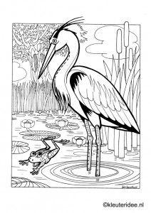 Kleurplaat reiger en kikker, thema de sloot, kleuteridee , heron and frog, pond theme preschool coloring, free printable