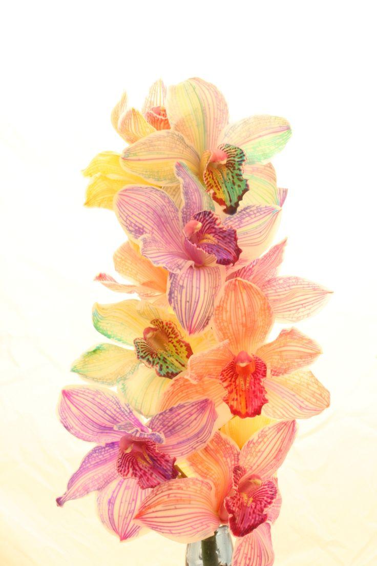 Радужные цветы... Фотограф под ником HappyRoses (28 фото - 6.71Mb) - Фото и рисунки, арт и креативная реклама