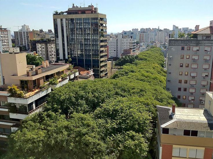 The World's Most Marvelous Streets Shaded By Flowers And Trees----Porto Alegre, Brazil.  There are so many trees lining this urban street it looks like a forest!