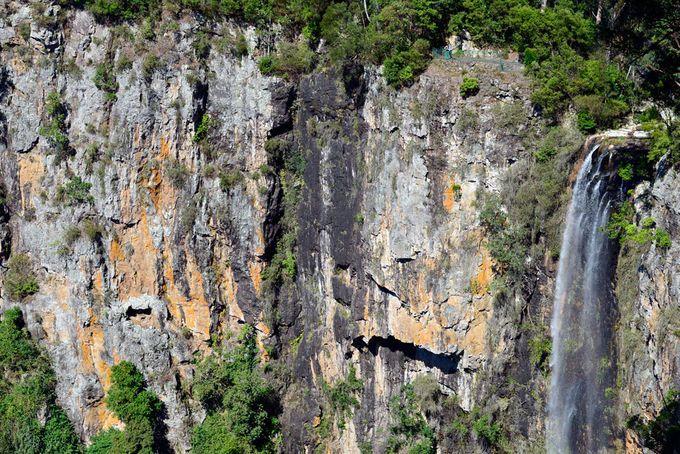 Purling Brook Falls Springbrook