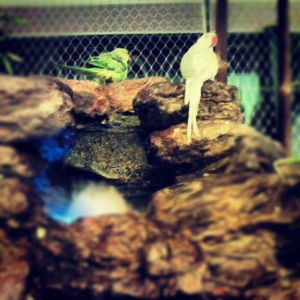 Woliera dla ptaków w Rezydencji Foksal