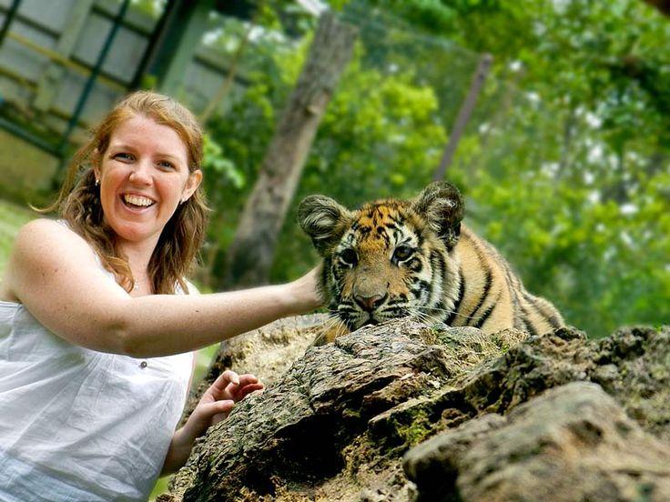 Tiger Temple vs Tiger Kingdom, Thailand