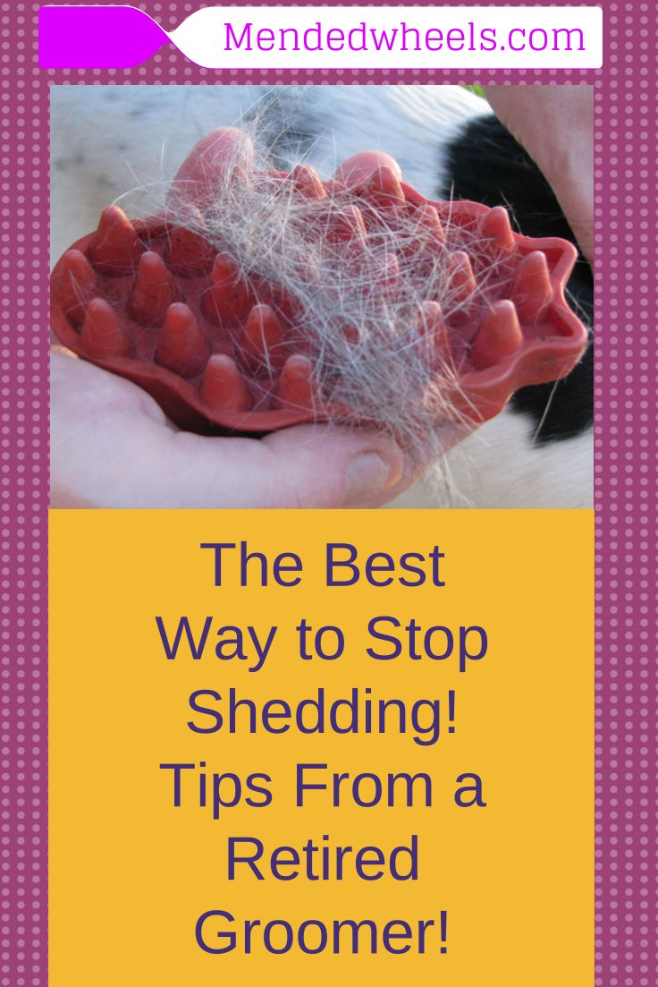 The Best Way to Stop Shedding!