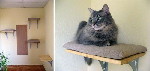 DIY Cat Shelves NEED!!