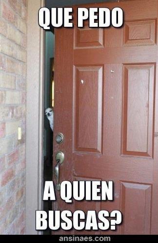 memes de perros - ¿Qué Pedo a quien buscas?