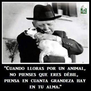 """""""Cuando lloras por un animal, no pienses que eres débil, piensa en cuanta grandeza hay en tu alma"""""""