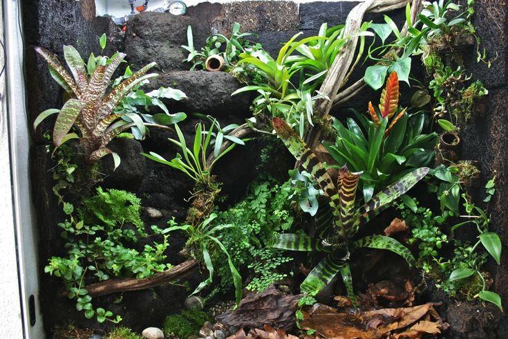 bromelia orchid plant terrarium gardening bonsai vivarium pinterest taggar v xter och. Black Bedroom Furniture Sets. Home Design Ideas
