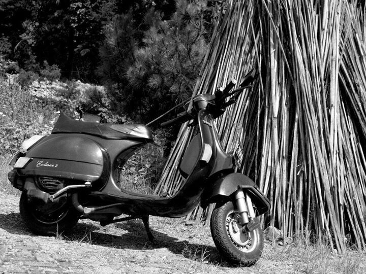 Scooter and Bamboo