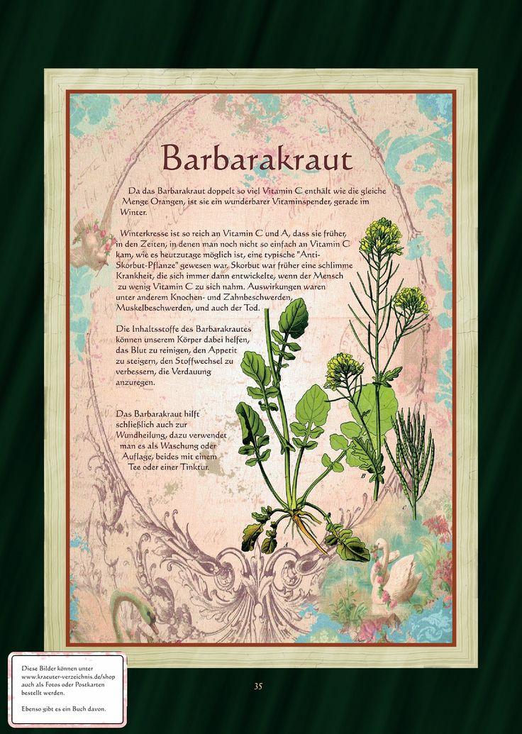 Barbarakraut - Barbarakrauttee