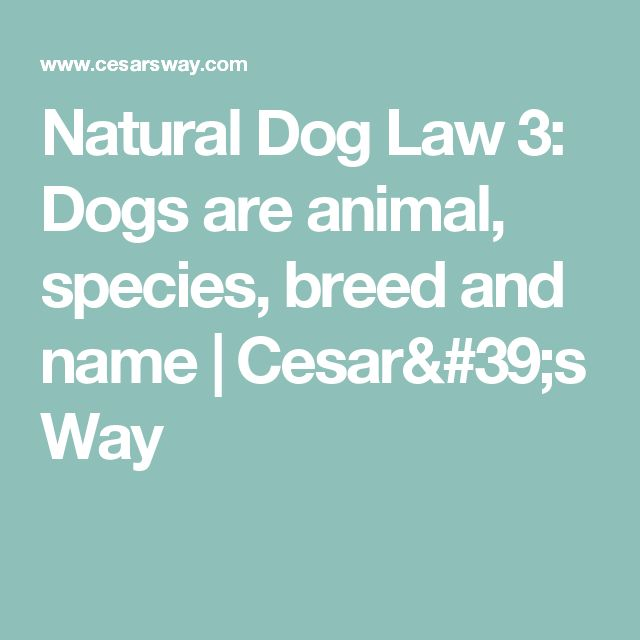 Natural Dog Law 3: Dogs are animal, species, breed and name | Cesar's Way