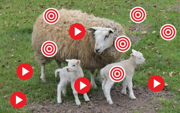 *▶ Het schaap