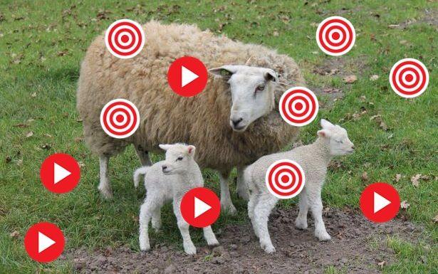 Digibord: het schaap