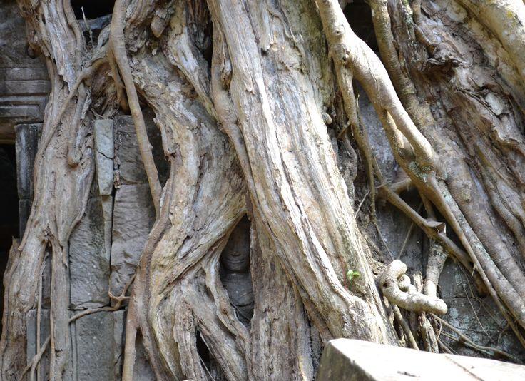 Tree engulfs a stone statue at Ta Prohm, Angkor, Camdodia