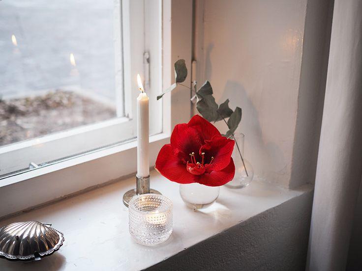 Kauniisti kotimainen ritarinkukka // ida365.fi