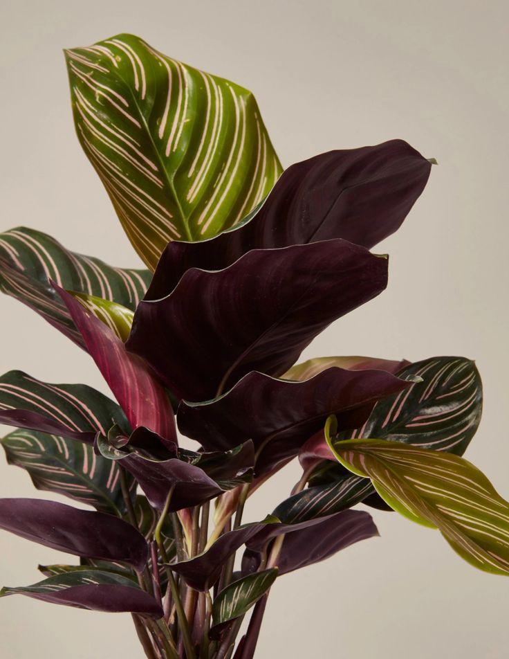 Цветы из цветной бумаги фото этого