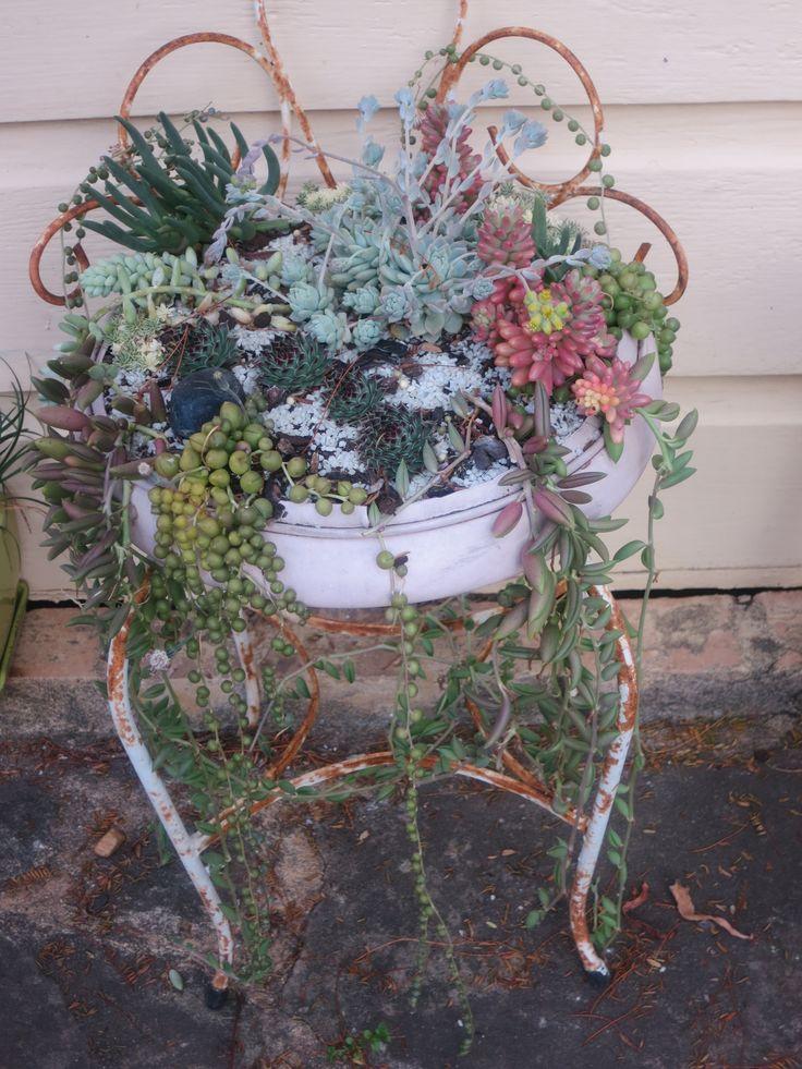 succulent arrangement in reclaimed childs seat