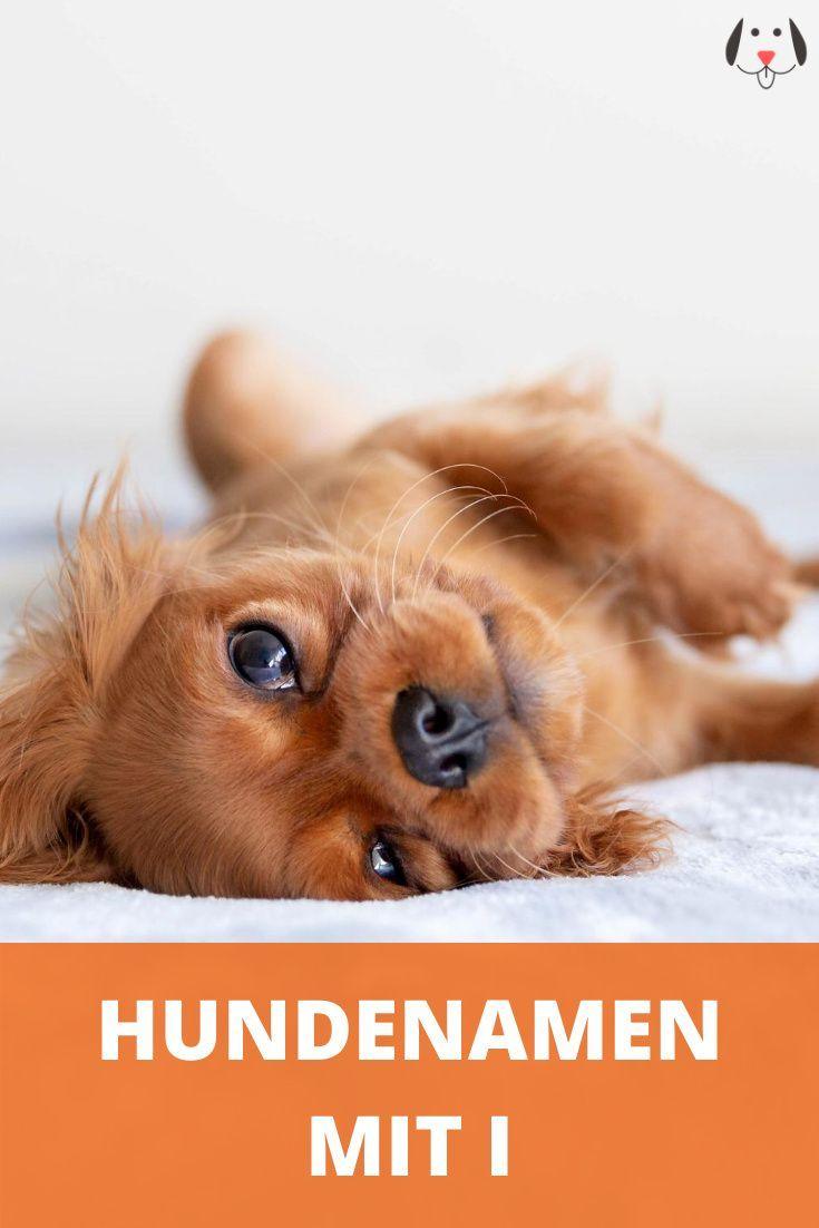 Hundenamen Mit I Weiblich Und Mannlich Mit Bedeutung Als Namensliste In 2020 Hundenamen Hunde Namen Fur Hunde