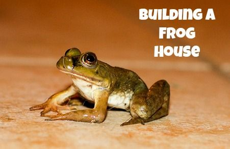 You can make the perfect home for this little one! Learn how to build a frog house with one of these great guides! Flickr image by Phaedra