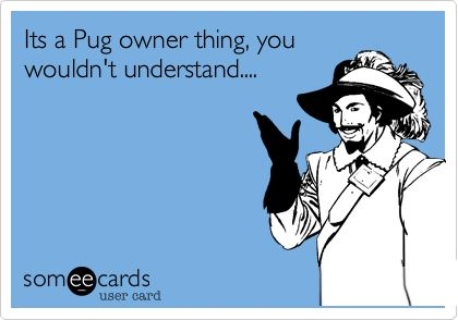 Funny Somewhat Topical Ecard: Its a Pug owner thing, you wouldn't understand....