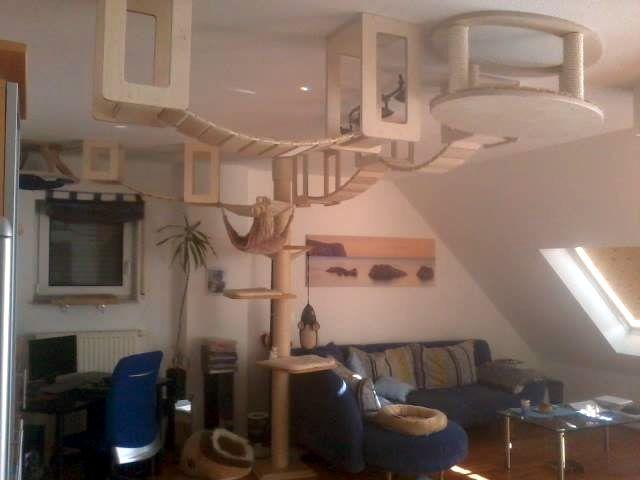 die besten 25+ katzenzimmer ideen auf pinterest | katzenhaus, Gartenarbeit ideen
