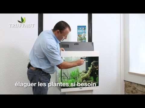 the 25+ best entretien aquarium ideas on pinterest | aquarium