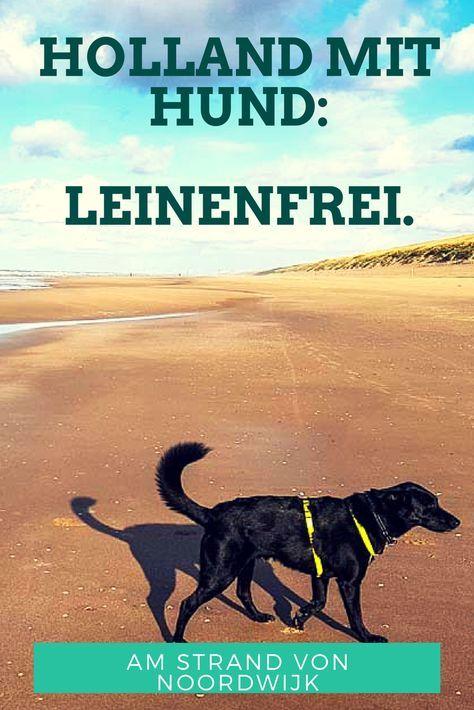 In Holland mit Hund am Strand, ohne Leine, Urlaub mit Hund