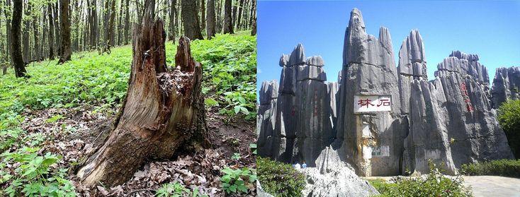 На Земле лесов нет!   Самые свежие новости - Информационный портал Крамола