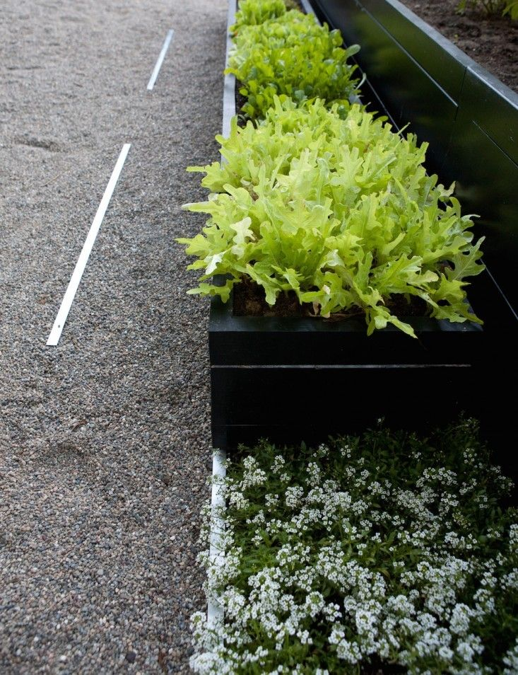 Kriste-Michelini-edible-garden-gardenista-considered-design-awards-3