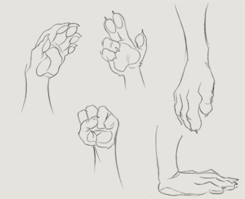 Line Art Photo Tutorial : 37 best furry anthro tutorials images on pinterest drawing