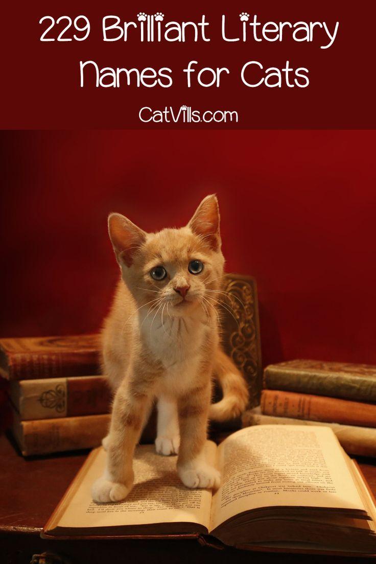 229 Brilliant Literary Names For Cats Catvills Cat Names Cats Literary Names