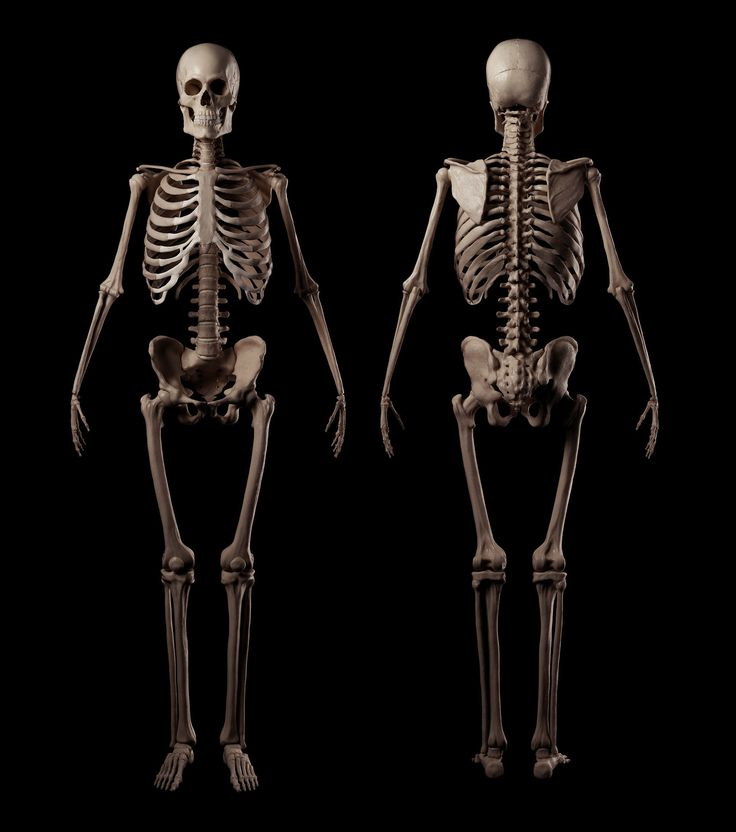 Картинки скелет человека фото