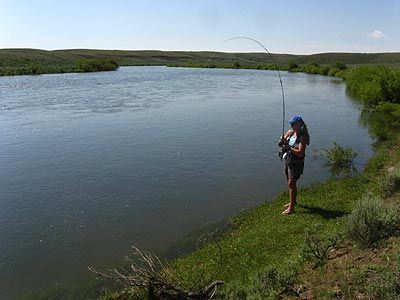 100 Best Images About Fly Fishing Yank On Pinterest