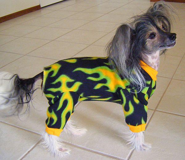 Cão de Crista Chinês (Foto: Reprodução / Bark Post)
