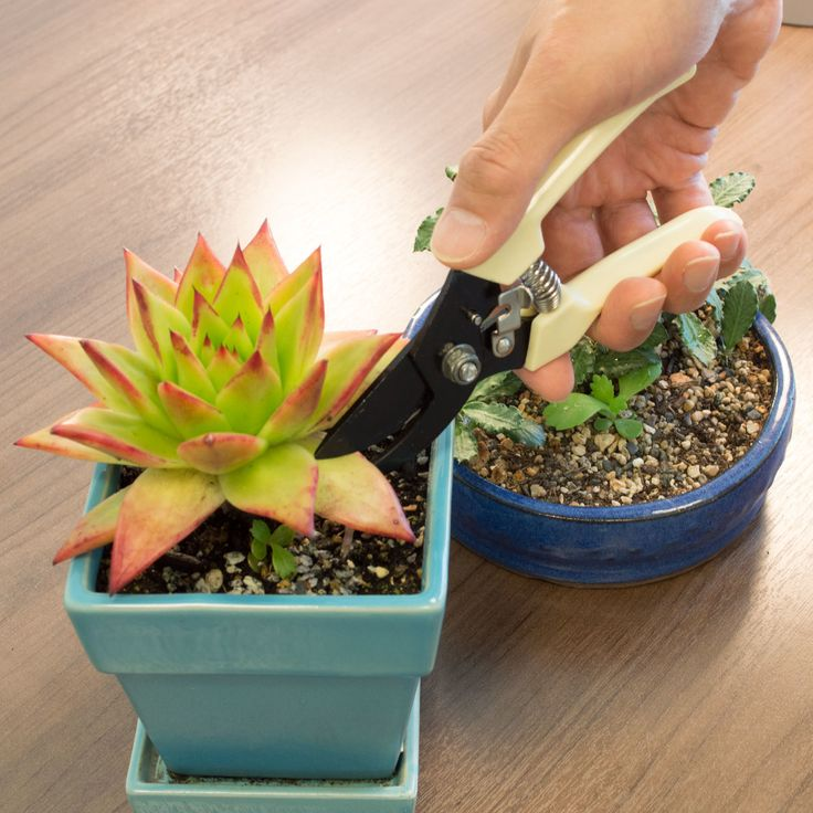 Our GardenHOME tools are the perfect companion for trimming your succulents and indoor plants  Aspectek