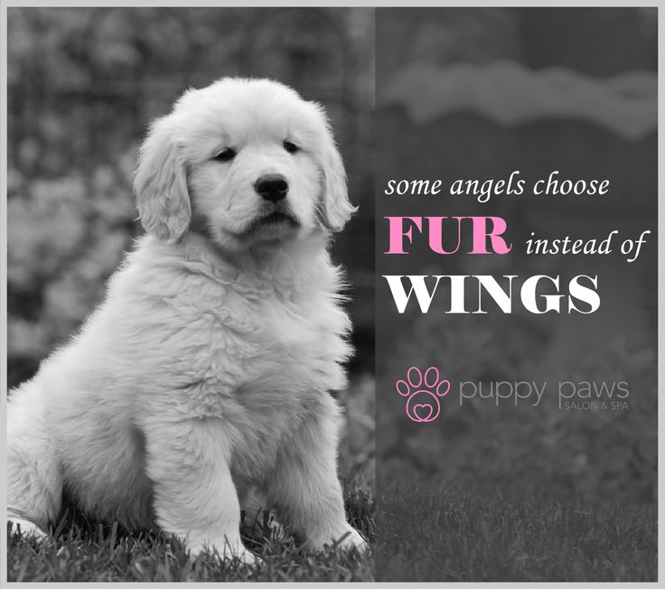 Some #Angels choose #Fur instead of #Wings #Dogs #DogBoarding #DogGrooming #DogsOfTwitter