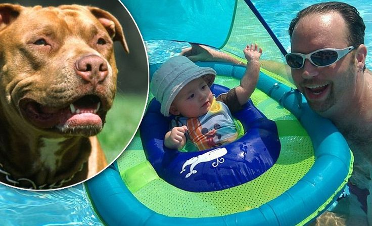 Revealed: Babysitter's two pit bulls mauled 14-month-old boy to death as toddler's heartbroken father posts angry rant vowing to make sure the breed is 'bred out'