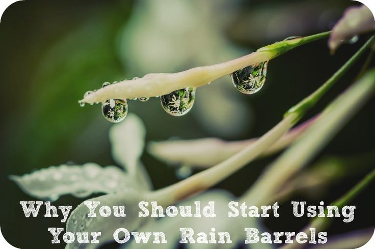 Rain barrels are a great way to save money, keep your plants nourished and help the environment! As long as your city and county allow it, discover the impressive reasons you should get a rain barrel set up in your own yard.